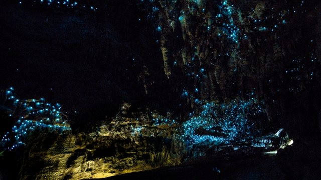 Glow Worm-Bay of Plenty