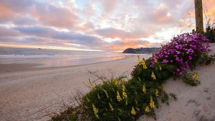 St Clair Beach Dunedin