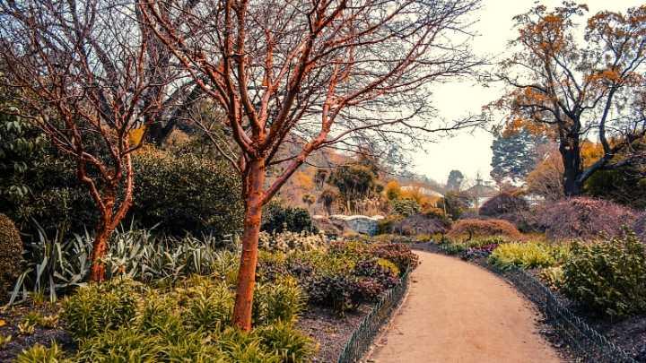 Jardin Botanico-Dunedin-Nova Zelandia