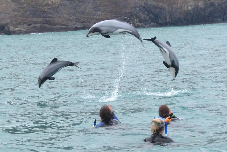 Swim with Dolphins Christchurch