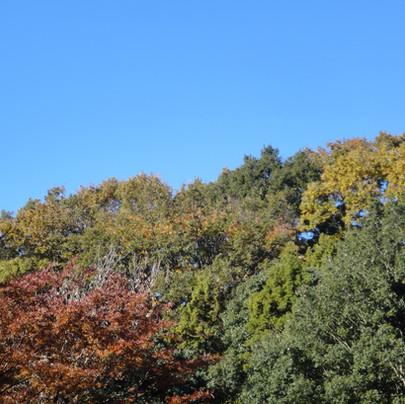 秋の空と木々 東京・八王子市 真言宗 玉泉寺