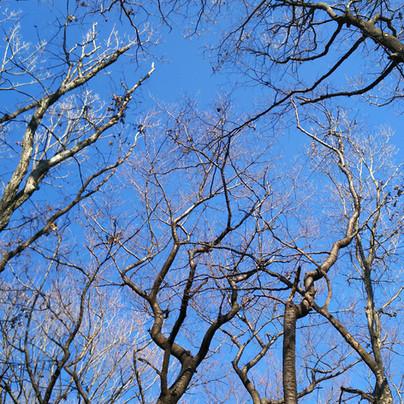 玉泉寺の山林 冬