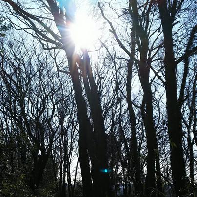 玉泉寺冬の山道