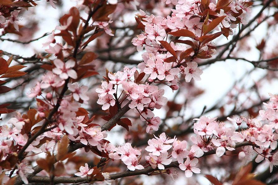 spring-2276402_1920.jpg
