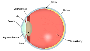 Glaucoma-1.png