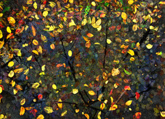 Fall Reconstructed.jpg