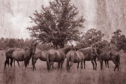 Rustic HorsesR.jpg