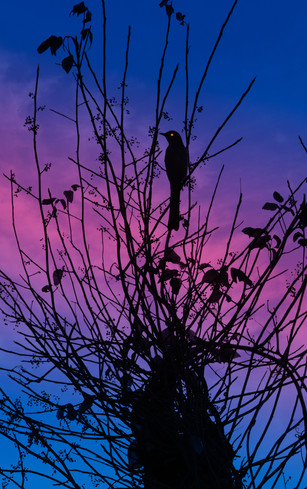 Morning Bird.jpg