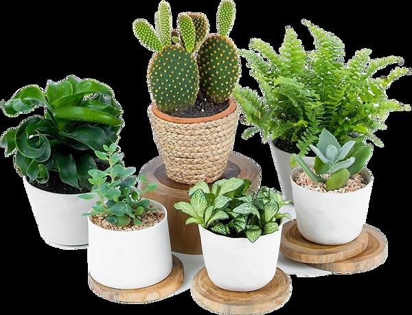 Saksı içinde değişik bitkiler