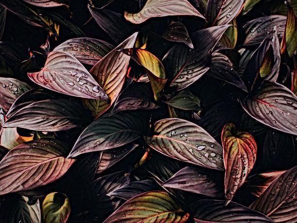 plant_leaves_drops_120041_1600x1200.jpg