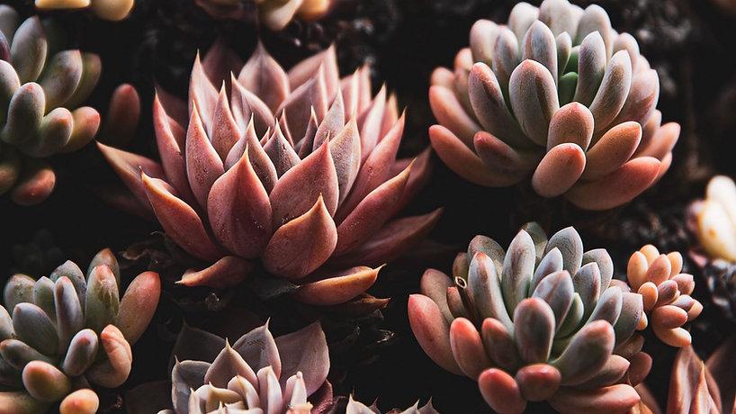 plants_succulents_closeup_155889_2048x11