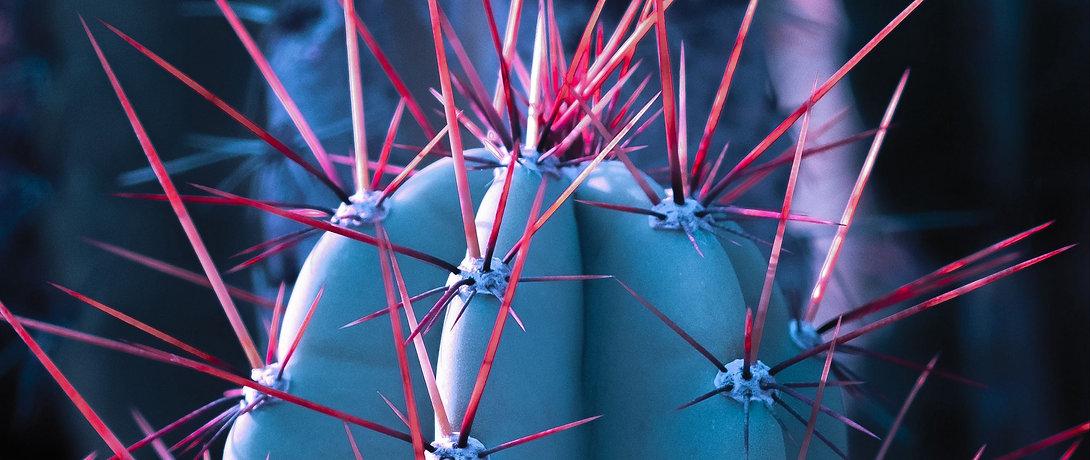 cactus_succulent_spines_134097_2560x1080