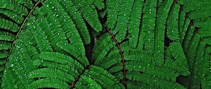 plant_drops_leaves_114478_2560x1080.jpg