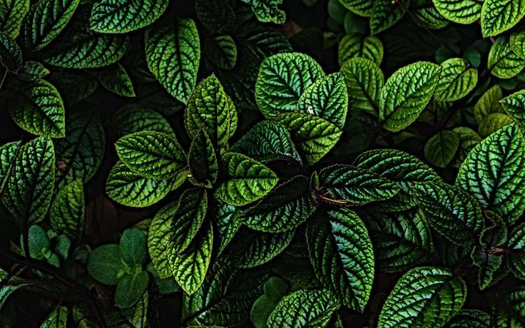 leaves_green_bushes_130214_3840x2400.jpg