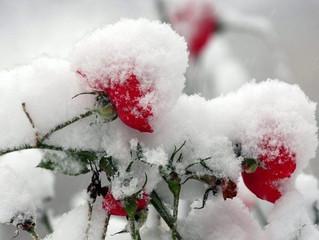 立春ゲートをくぐる前の冬土用期間