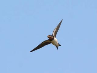 空高く飛ぶツバメのように風にのって心を解放しよう