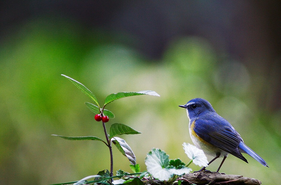 青い鳥1.JPG