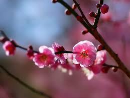 立春から新しい一年が始まります!