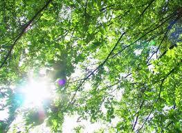 安定の第一チャクラに自然界のエネルギーを取り入れよう!