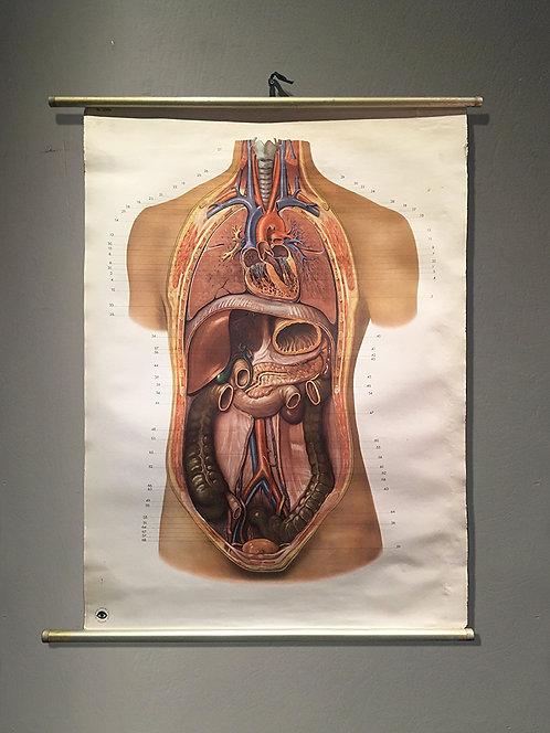 Human Anatomy  | 人体解剖図 20062