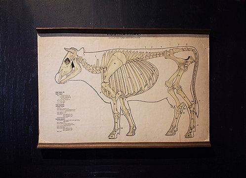 Poster Cattle diagram | 牛のダイアグラムのポスター 16058