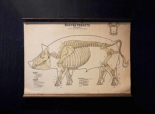 Poster Pig diagram | 豚のダイアグラムポスター 16058