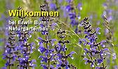Burn Garten.jpg