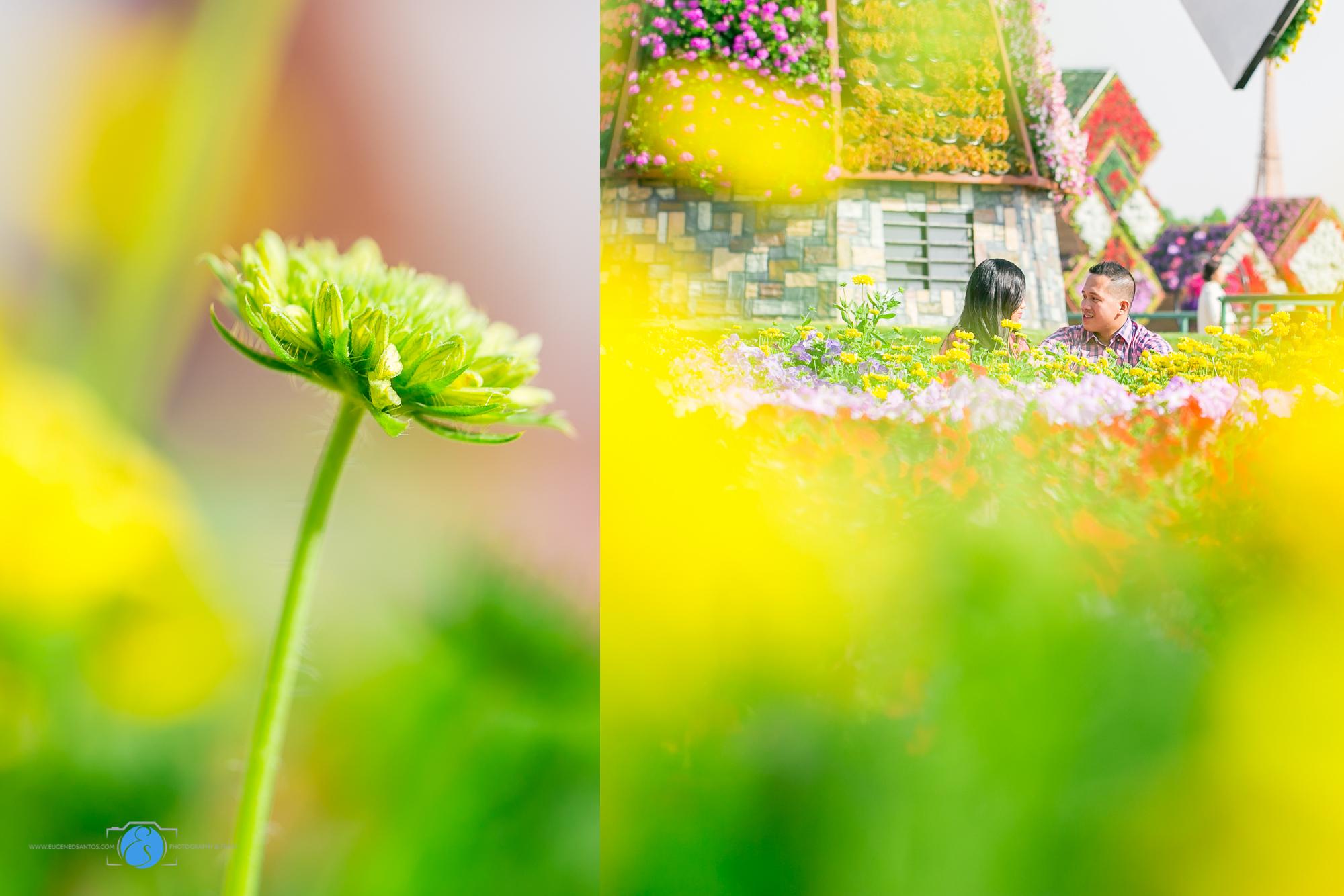 Miracle Garden Prenup Dubai--2.jpg