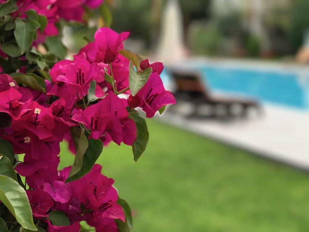 Bahçe, havuz