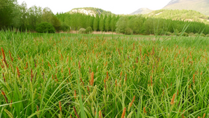 Quelques habitats naturels typiques des marais ...