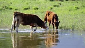 Associer utile et biodiversité : l'élevage au cœur de la zone humide