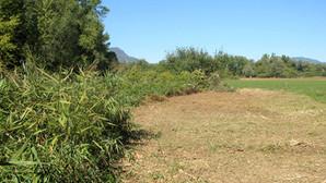 Début des travaux : broyage de la végétation avant les terrassements