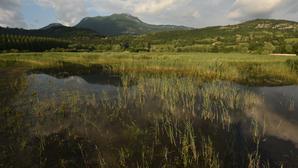 Les milieux humides : des milieux naturels à fort intérêt