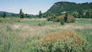Un ancien marais dégradé à fort potentiel de biodiversité