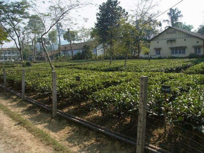 How Climate Change Is Affecting Your Cuppa
