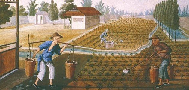 Building The Future Of Tea