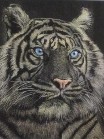 """""""Tigers Eyes"""""""