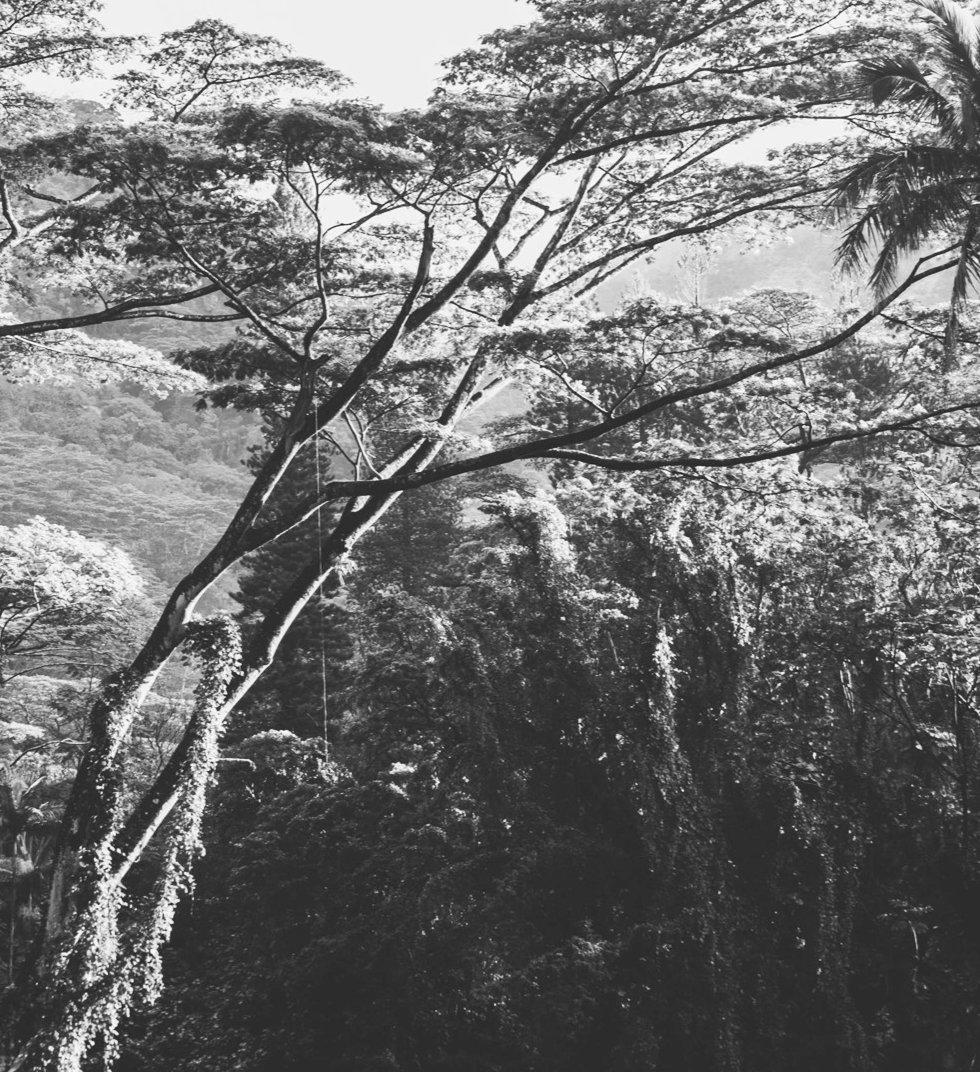 Beautiful Nature_edited.jpg