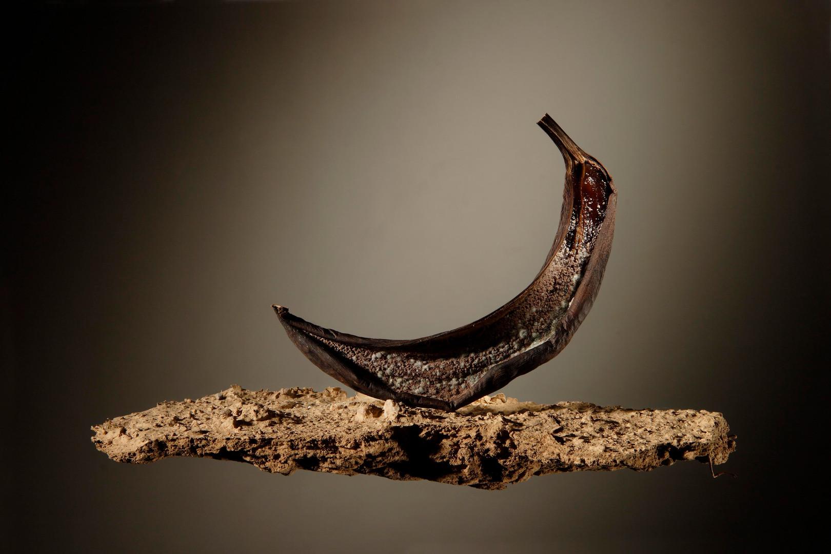 nau_banana wix.jpg