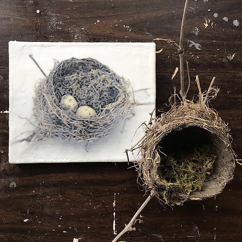 Nest with Quail Eggs and Moss