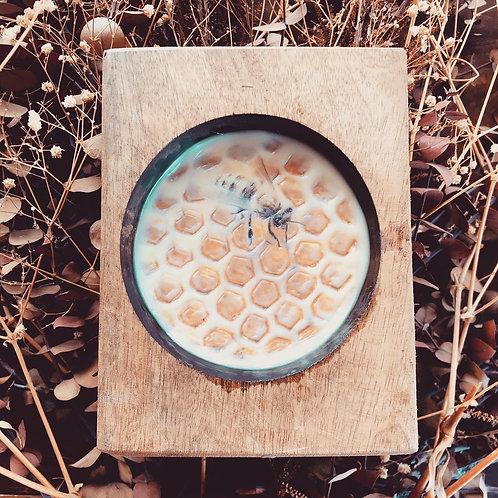 Sugar Mold Hive III