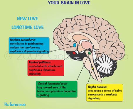 Braininlove.jpg