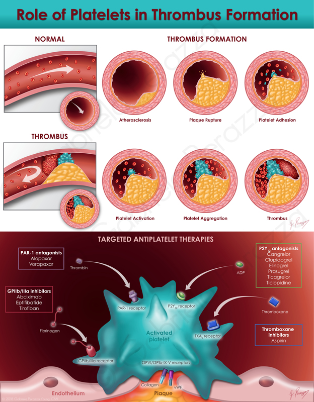 Platelets and Thrombus Formation