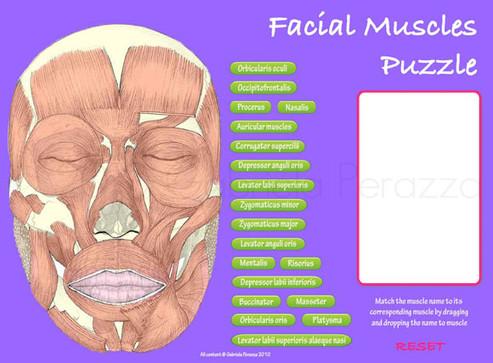 Facial_Muscles.jpg