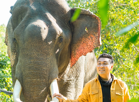 Worth-visiting nearest Nature Elephant Camp in Yangon