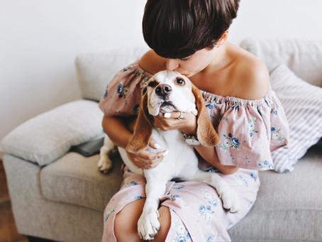 Como tirar cheiro de xixi de cachorro do sofá? Veja as nossas dicas e descubra!