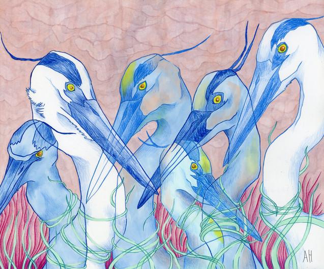 """""""Big Blue Herons"""""""