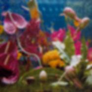www.silvervinearts.wix.com/summerarttrail - Summer Art Trail