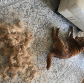 21 Things From Amazon For People Who Are Basically Always Covered In Pet Hair