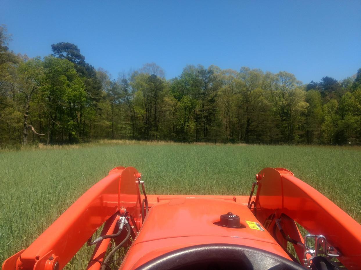 Mowing Rye